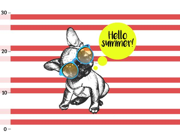 Bio-Jersey, Frenchie summer, French bulldog by BioBox,...