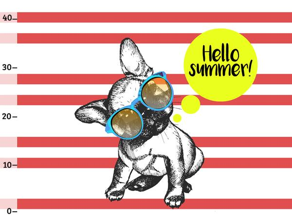 Bio-Jersey XL Panel Frenchie summer, French bulldog by...
