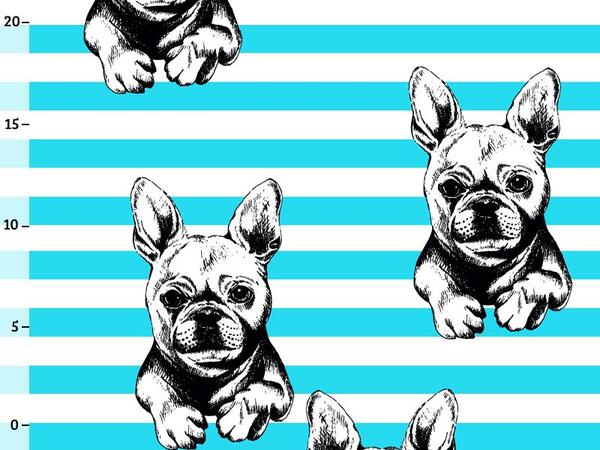 Bio-Jersey Frenchies, Streifen türkis, French bulldog by...