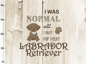 Bio-Jersey, I was normal XL Panel, braun, Labrador, by...